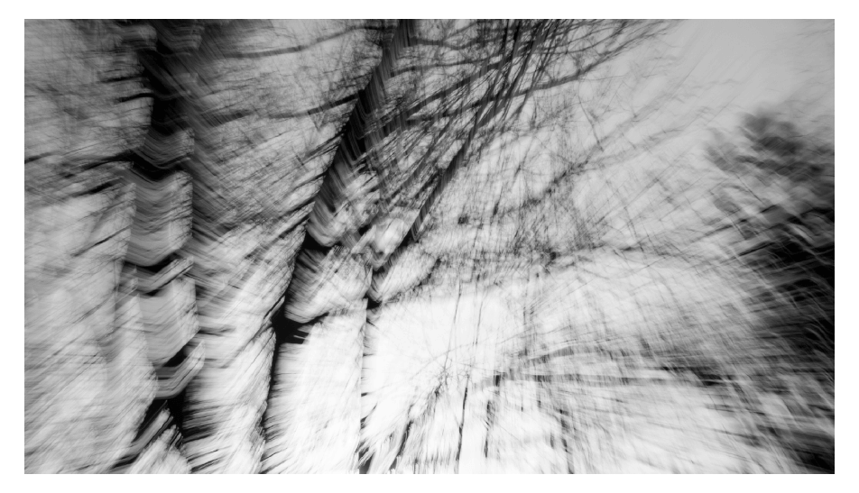Abstract Tress bl & wh